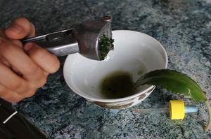 Как использовать сок каланхоэ при насморке