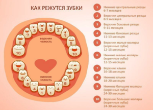 Прорезание зубов