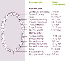 Какие зубы меняются на постоянные