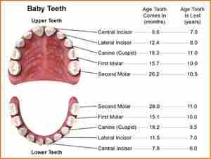 Когда ребенок начинает менять зубы