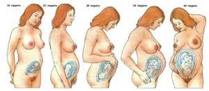 Особенности 5 месяца беременности